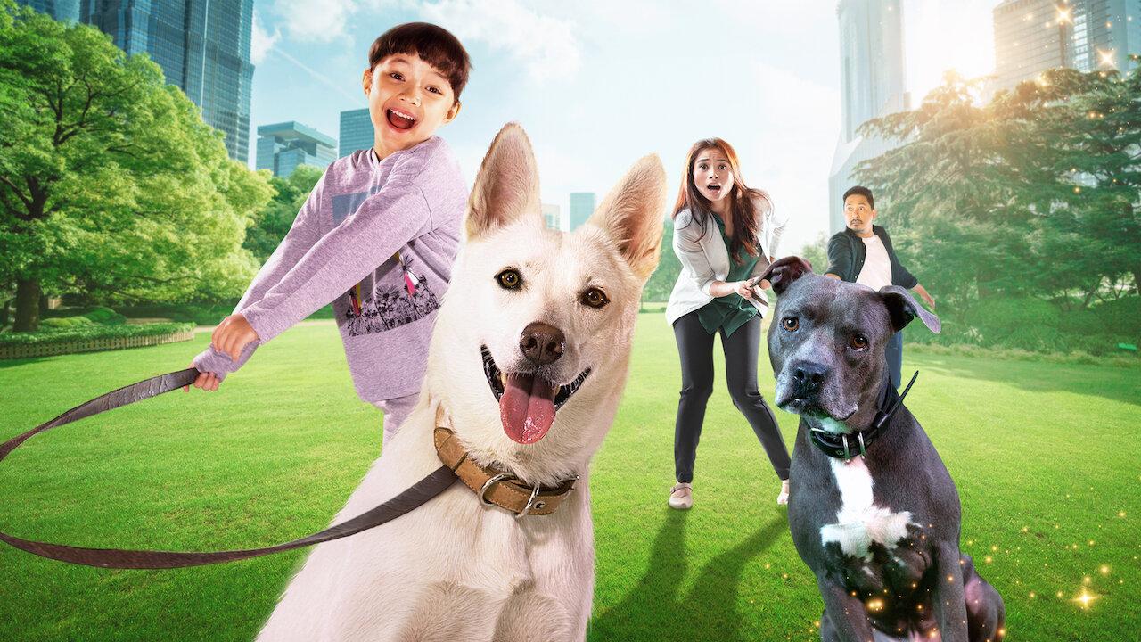Kisah Anjing Liar Yang Menyentuh Jiwa